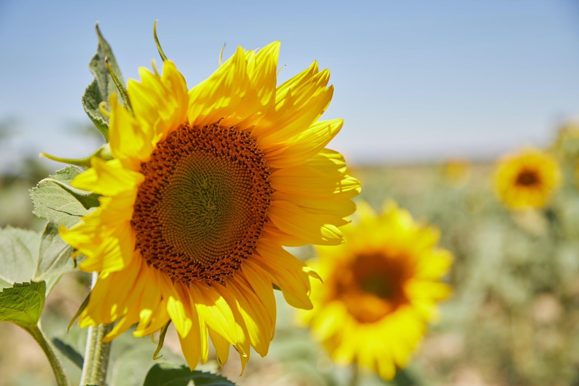 sunny field summer sun