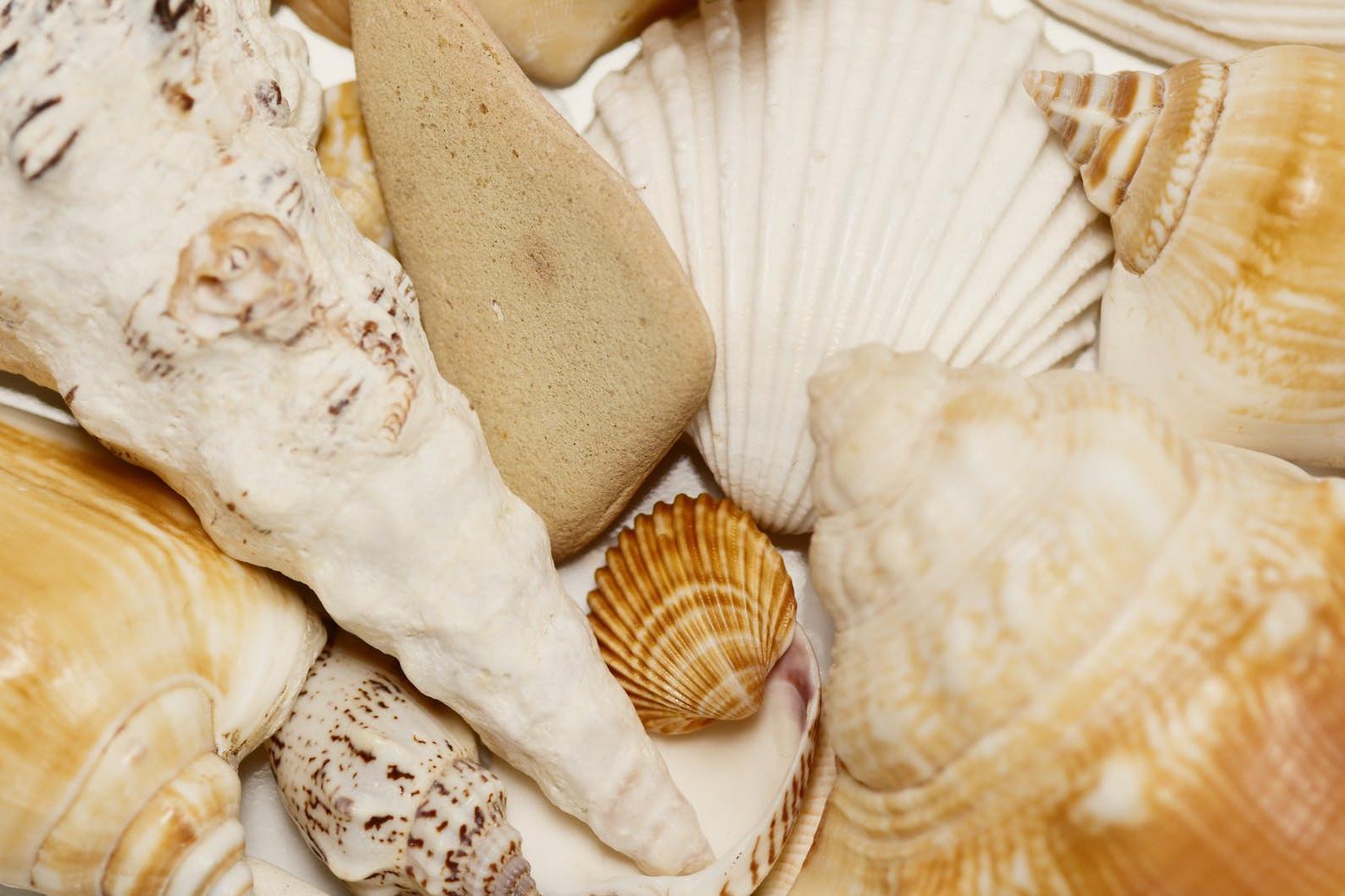 white and brown seashell on white textile